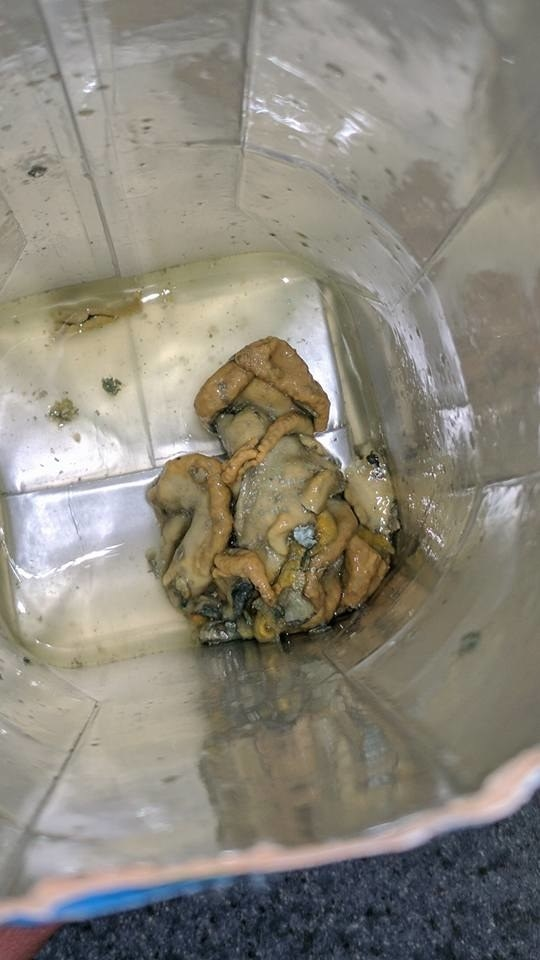 "That's because Kline became violently ill after finding ""an octopus-looking thing"" in her Vita Coco coconut water on April 25, she told BuzzFeed News."