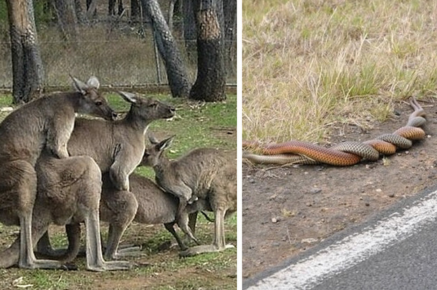 26 Times Australian Animals Just Took Things Way Too Far