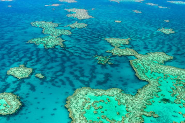 —remcmOne thousand, five hundred species of fish call the Great Barrier Reef home. P.S. You can actually see this massive reef from outer space.