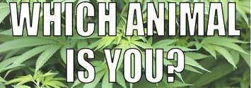 18 BuzzFeed Quizzes For Stoners