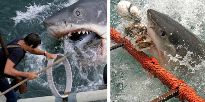 In the summer of 1916, a giant great white shark took five people as its victims off the Jersey Shore. These attacks were said to have been the inspiration for the most infamous shark film franchise of all time.—josien2
