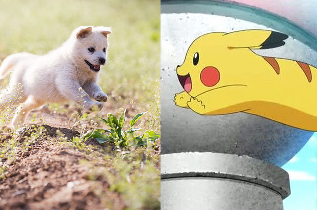 Which Pokémon Is Your Pet Most Like?