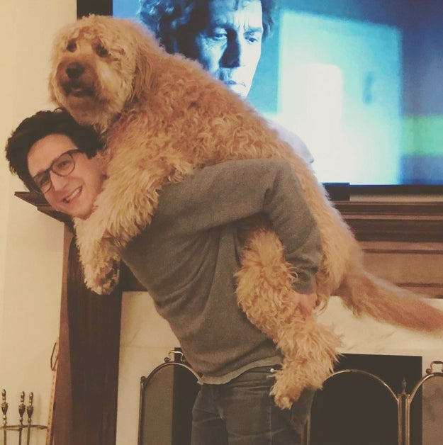 If you've seen the Netflix series Love, then you know who Paul Rust is. But, what you don't know is who his dog is.