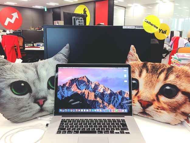 When I placed them next to my computer, I felt completely at peace while working.