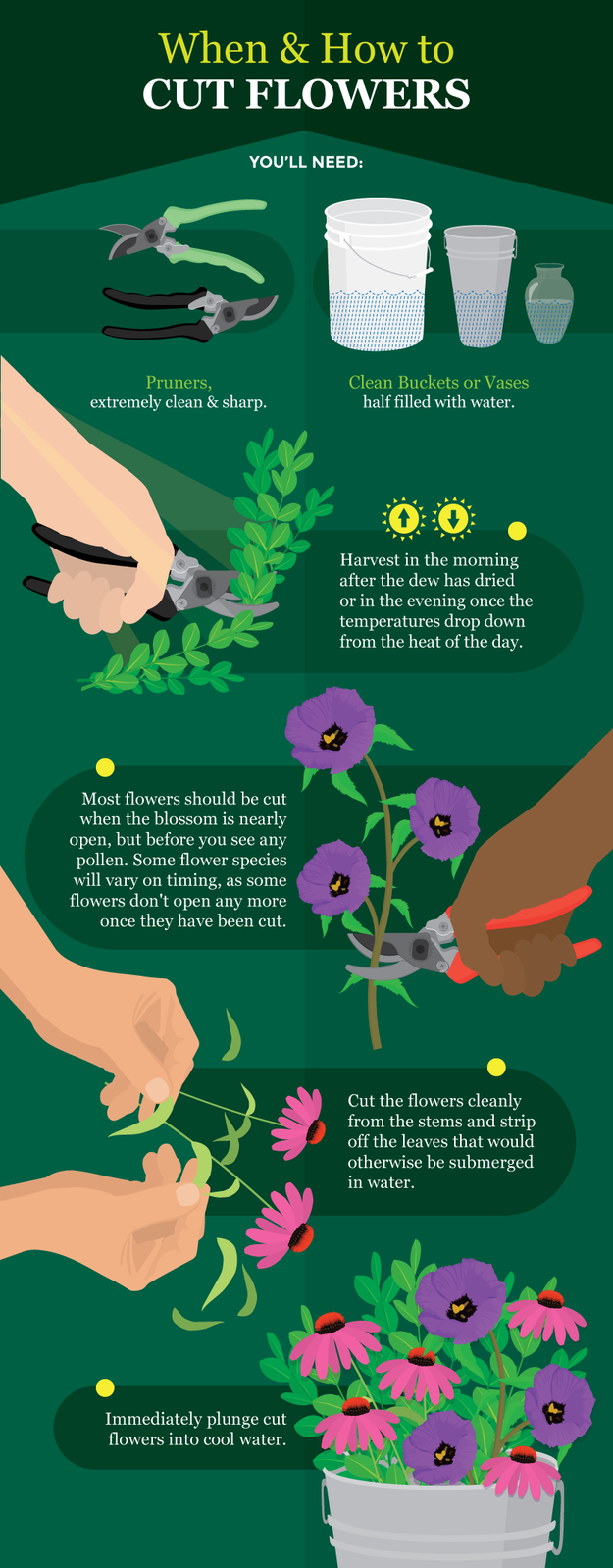 If you're putting them in a vase, here's how to cut them properly:
