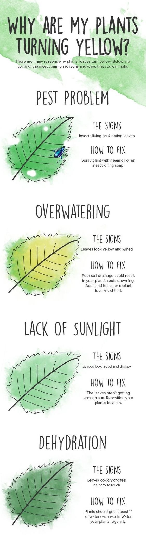 guide that shows that leaf problems could be a sign of dehydration, lack of sunlight, overwatering, or a pest problem)