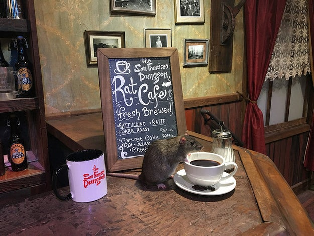 "For just $50, people can ""sip their coffee while seated at bistro-style tables, nicely draped with red and white gingham tablecloths...all while being surrounded by live rats."" You will get coffee, tea, or water, and a breakfast pastry."