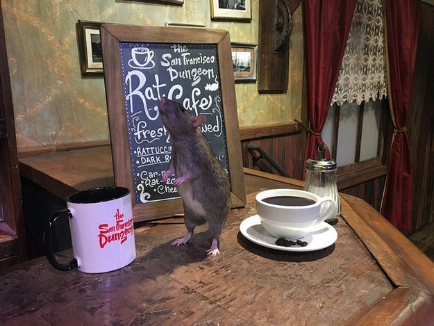 "Have you ever been enjoying a coffee, tea, or nice breakfast pastry and thought to yourself: ""A rat crawling on the table would make this a much better experience."" Well, you're in luck, if you are in San Francisco, that is."