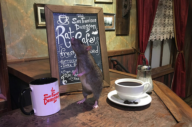 Rats Will Crawl Around You As You Eat At This New Creepy Cafe