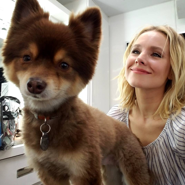 Kristen Bell had a moment with this dog.