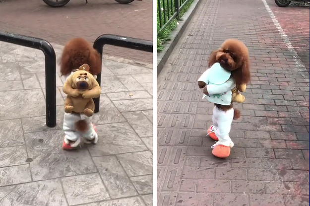 Dog Walks On Two Legs With Backpack