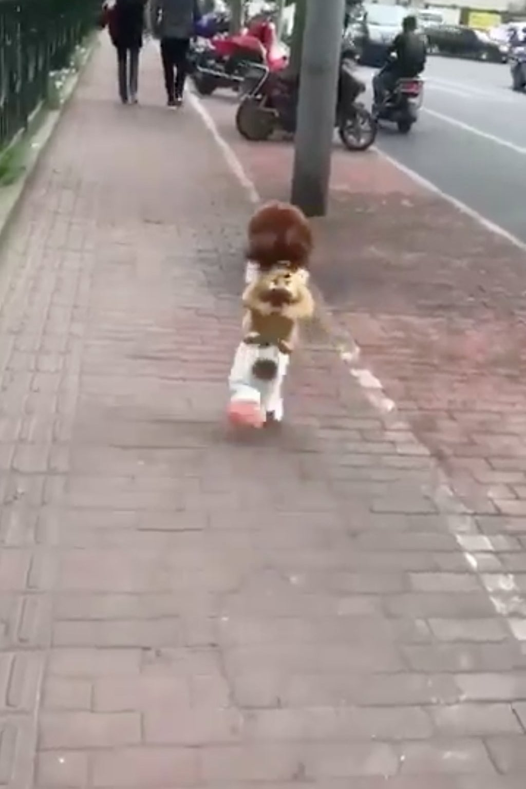 Dog Walking Like A Person China Wanghong