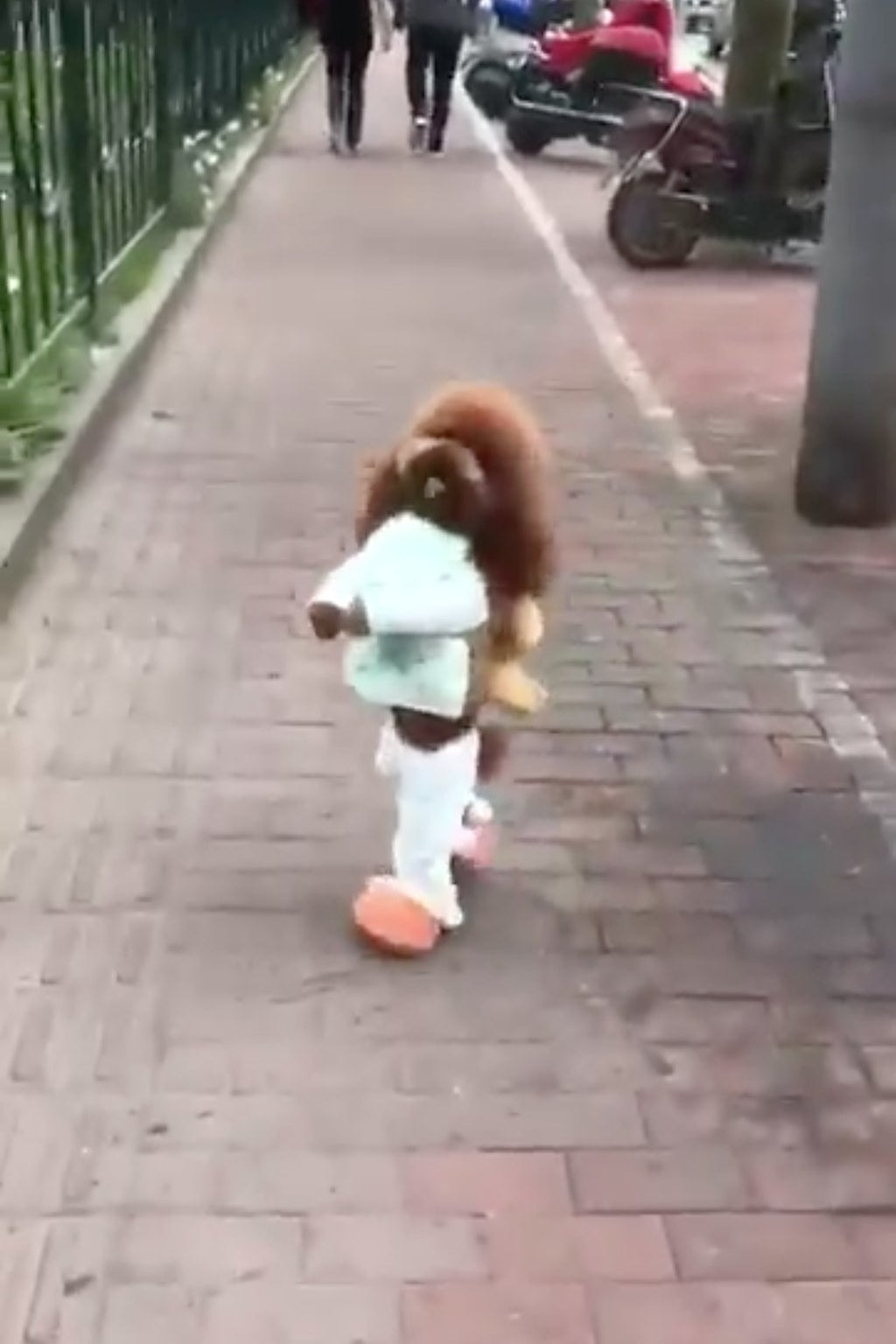 A Video Of A Dog Walking Like A Little Person Went Viral And Now ...