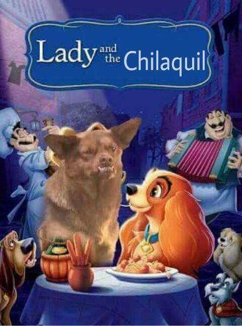 sub buzz 28279 1495423482 1?downsize=715 *&output format=auto&output quality=auto 20 memes que prueban que el perro chilaquil se robó nuestros corazones