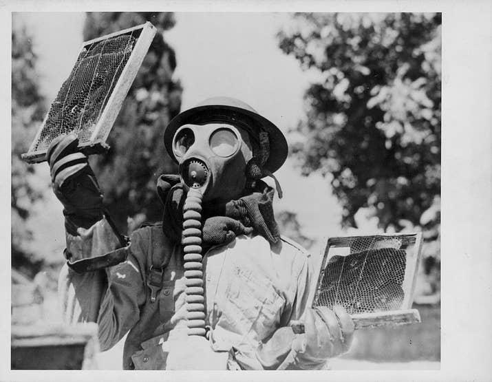 Un soldado utiliza su máscara de gas para encargarse de una colmena encontrada en Libia durante la Segunda Guerra Mundial (1943).