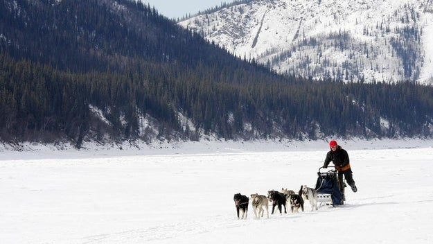 Mush sled dogs through the Cairngorms.