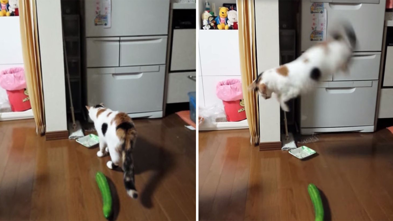 17 Little Details Nobody Tells You About Living With A Cat
