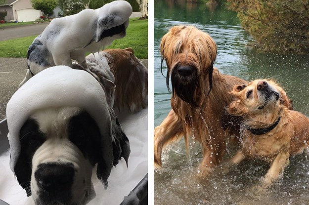 24 Pictures Of Dogs Taking A Bath That You Need To See ASAP