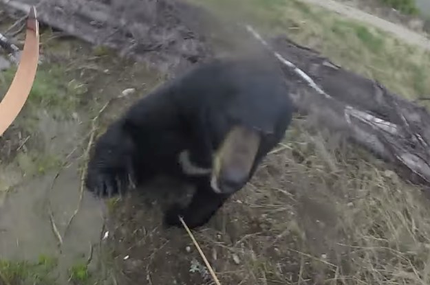 This Canadian Survived An Attack From A Charging Bear While Filming The Whole Thing