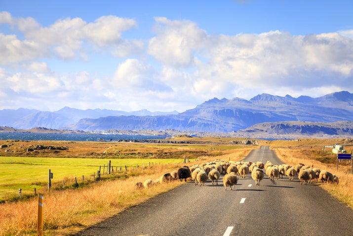 Por donde se mire es hermoso y usted definitivamente ver algunas ovejas, caballos y aves.