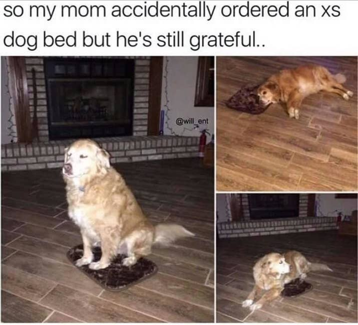 Dogs That Prove We Dont Deserve Dogs - 20 reasons why you should be thankful to have a dog