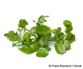 As a healthy leafy green that keeps countless benefits, watercress (Nasturtium officinale) sure is not one of the most famous. It can be found in many places, but some consider this leaf vegetable as weed, which means, it is deemed unhelpful and unwanted.What is unknown to many is that there's certainly more to watercress than what meets the eye. It may look undesirable to you at first, but take time to look into what this veggie can do and you will be left in awe.As a good source of vitamin A and calcium, watercress aids in bone health. It also helps keep your teeth and gums healthy. But it does not end there. As a vegetable that is rich in vitamin K, having watercress as part of daily consumption is a good way of treating Alzheimer's disease. Watercress also contains a good amount of vitamin C and manganese. Its benefits are more or less similar with organic coconut oil.In addition, a compound derived from watercress called phenylethyl isothiocyanate was subjected to a thorough study, and experts found out that the compound has certain anti-cancer properties. This health benefit alone is enough to place watercress on the list of the must-consume superfoods.It is saddening that not many are aware of the health benefits of this aquatic plant, if only people were not quick to disregard something that looked like an ordinary weed.