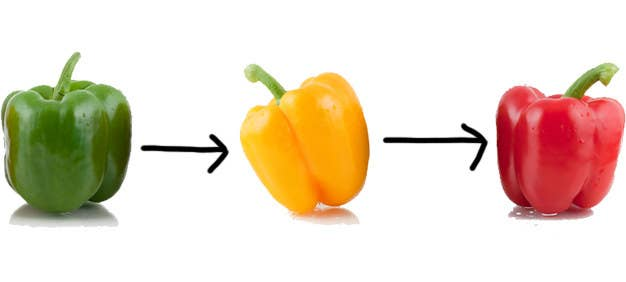 I Just Learned The Truth About Bell Peppers And WHAT THE HELL?