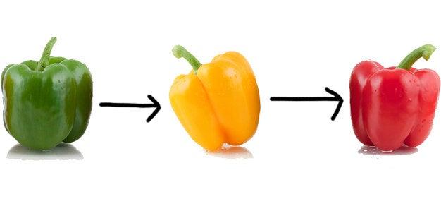 Isso mesmo: os pimentões verdes amadurecem, ficam amarelos/laranjas e eventualmente ficam vermelhos. (Alguns pimentões só chegam a ficar amarelos e laranjas, mas, mesmo assim, eles já foram pimentões verdes.)