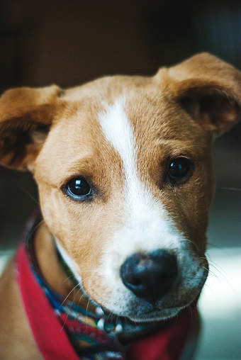 11 Heroic Dog Stories Thatll Make You Say, -6965