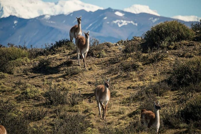 In 1991, US conservationist Doug Tompkins bought some land in Chile's Renihue Valley. In 2017, his widow Kristine Tompkins formally donated the land to Chile's government, which also pledged to protect a further 10 million acres.