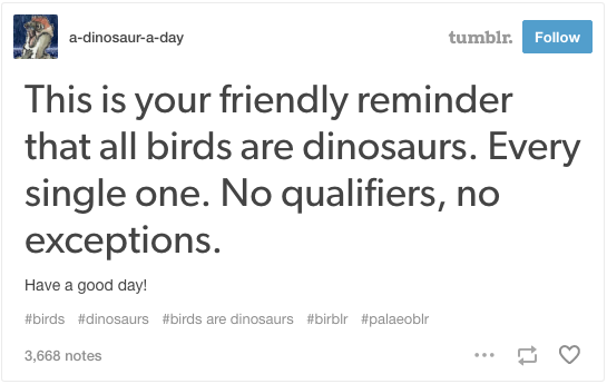 sub buzz 3805 1494012471 3?downsize=715 *&output format=auto&output quality=auto 17 tumblr posts about birds that are funnier than they should be