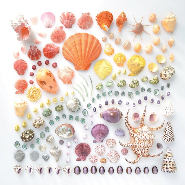 Like, look at these magnificent shells!