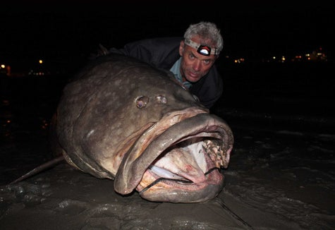 19 Unbelievable Fish Jeremy Wade Caught On River Monsters