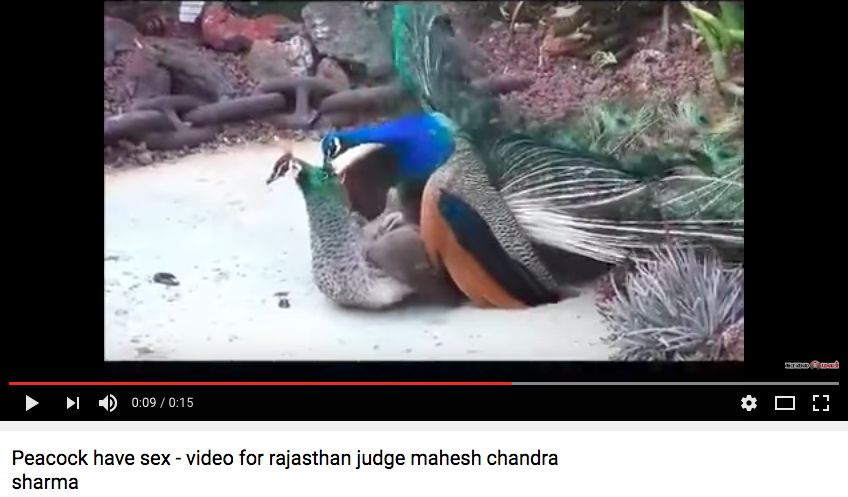 Sit on my face porn videos