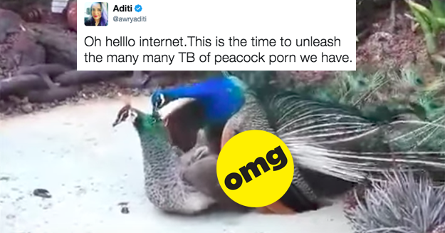 The Indian Internet Is Being Bombed By Peacock Porn -7110