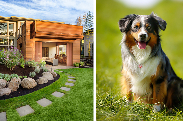 Create Your Dream Home And We Ll Reveal What Type Of Dog You Should Get