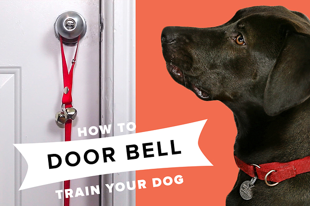 How To Train Your Dog To Use A Doorbell