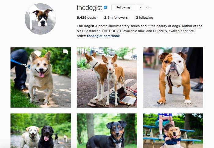 Todos estos seguidores visitan la cuenta en busca de fotos de perros reales, tomadas cada día por Elias mientras recorre las calles de Nueva York. Hasta la fecha, ha fotografiado a más de 25.000 perros en todo el mundo.