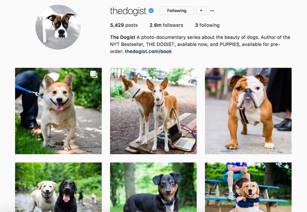 But one not-so-typical thing? He's also the guy behind The Dogist - the viral Instagram account that's racked up 2.6 million followers.