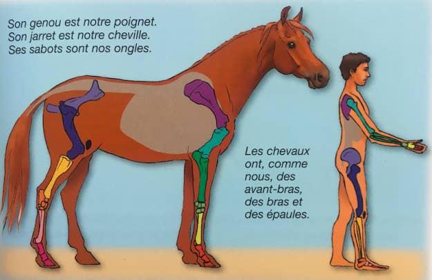 caballo nuevo