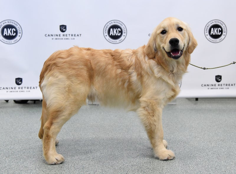 This furry stud is ready for the summer. Though he's on the older side of this year's cast, he knows he can hang with Rachel and the other contestants. He's not a regular dog, he's a cool dog.