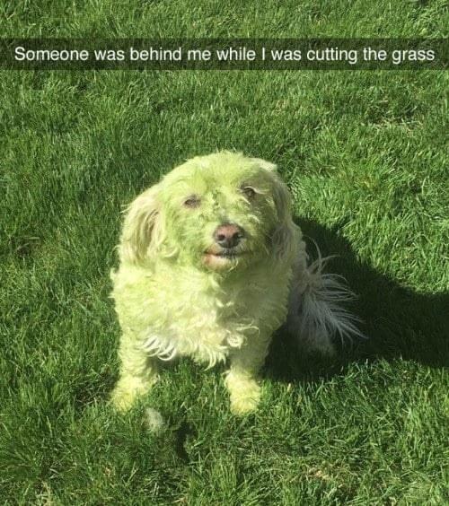 The helpful dog: