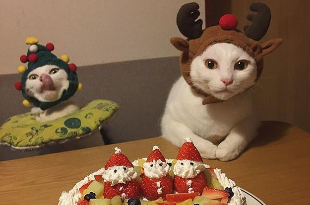 These Are The 11 Most Important Cats In Japan Right Now
