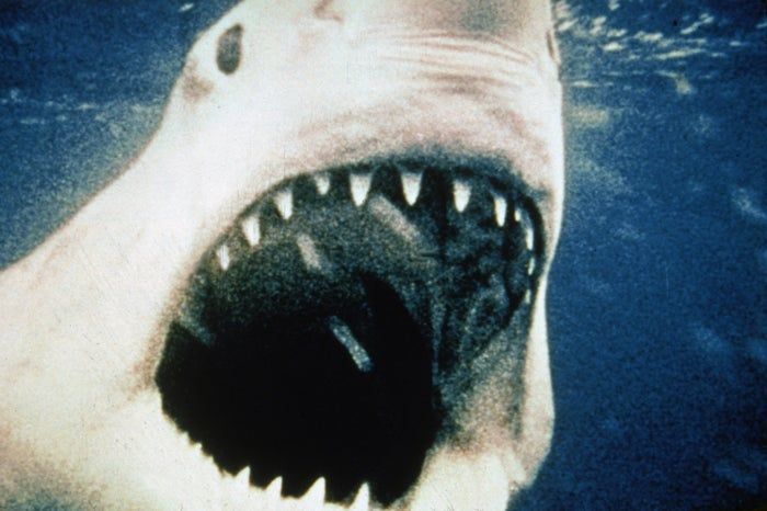 A mechanical great white shark opens its mouth underwater during the 1974 filming of Jaws.