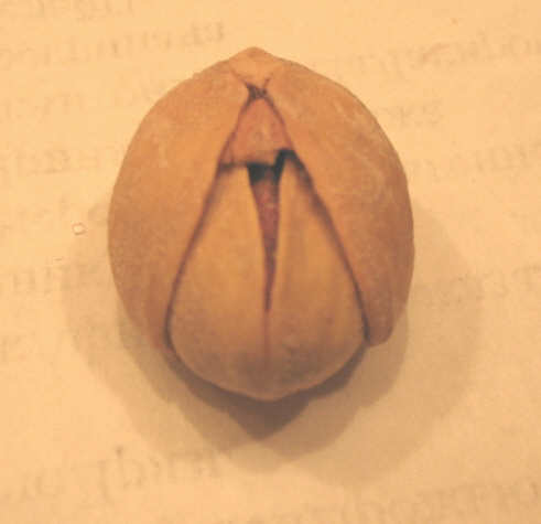 A pistachio shell folded around another pistachio