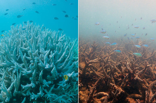 Global Coral Reefs Are In Huge Trouble, And We're Not Doing Enough To Save Them