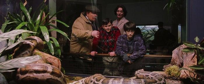 En la película: Los Dursley visitan el zoológico para festejar el cumpleaños de Dudley y como es una salida en familia, llevan a Harry con ellos.En el libro: Los Dursley no quieren llevar a su sobrino, pero no encuentran con quien dejarlo. La señora Figg, su vecina, tiene una pierna rota y no puede hacerse cargo; la tía Marge no quiere cuidarlo por que no lo soporta y la amiga de la tía Petunia no está en la ciudad, así que no les queda de otra más que llevarlo. Además, los acompaña Piers Polkiss, un amigo de Dudley.