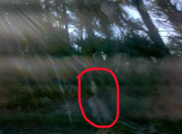 """This photo was taken in the marsh on Fripp Island, South Carolina, out the car window. I was freaked out by the very clear image of a dark-haired woman, so I showed it to a cashier when we stopped at a local café. She said she's seen many images like this, because Fripp Island is very haunted.""—kristenc4"