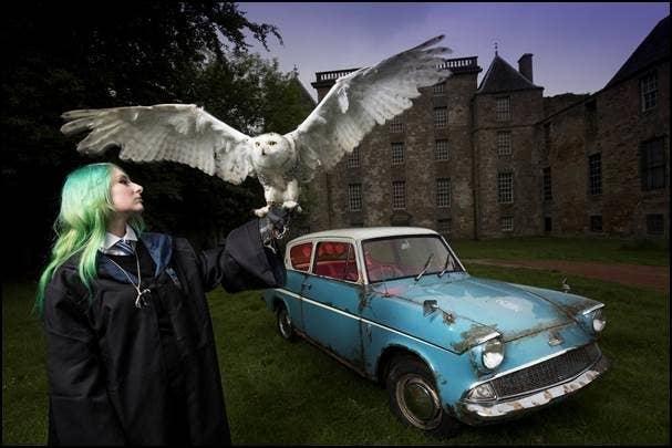 Meet Errols Sister At The Scottish Owl Centre