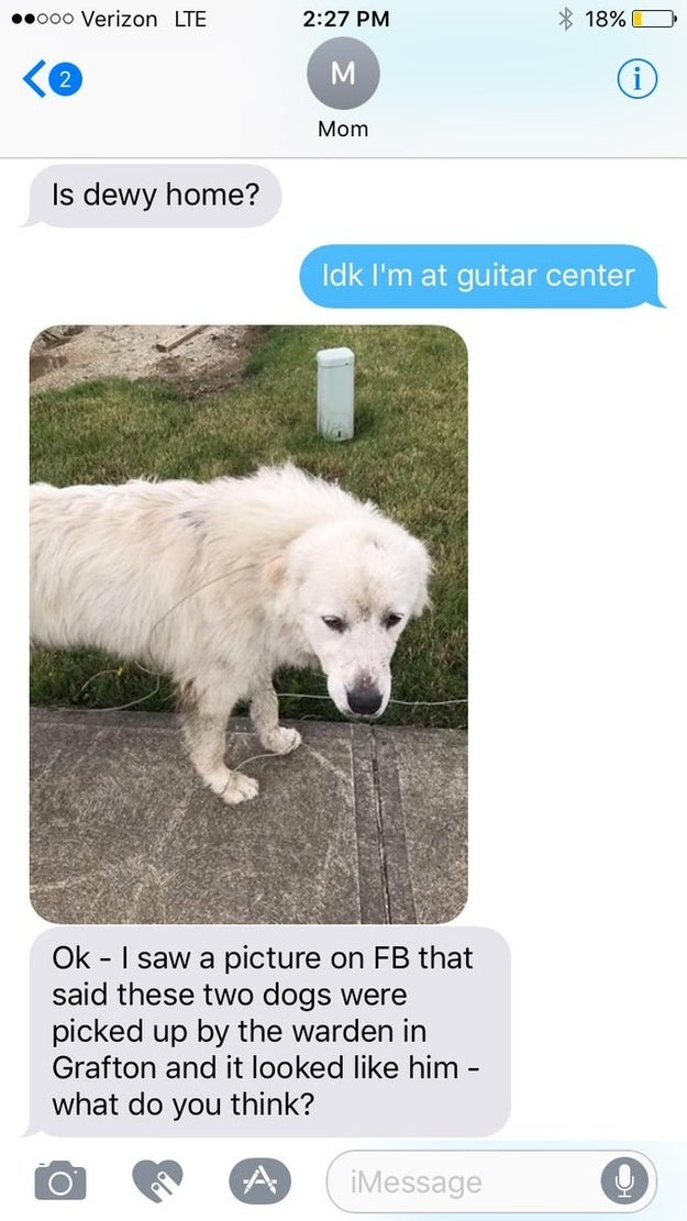 On Tuesday, Squires saw a Facebook post saying two dogs had been found wandering town. She texted her son a picture of one of them and asked him to check that it wasn't Duey.